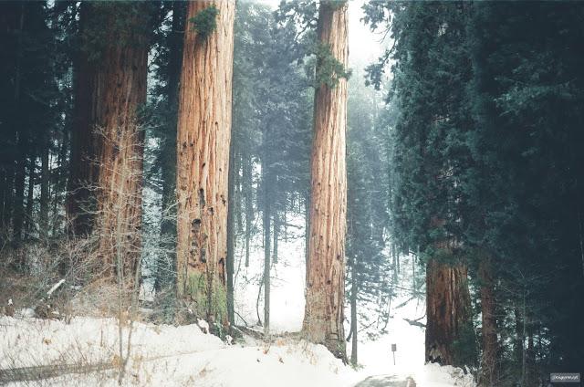Trọn bộ 65 presets mùa đông siêu cool [Lightroom] - 02